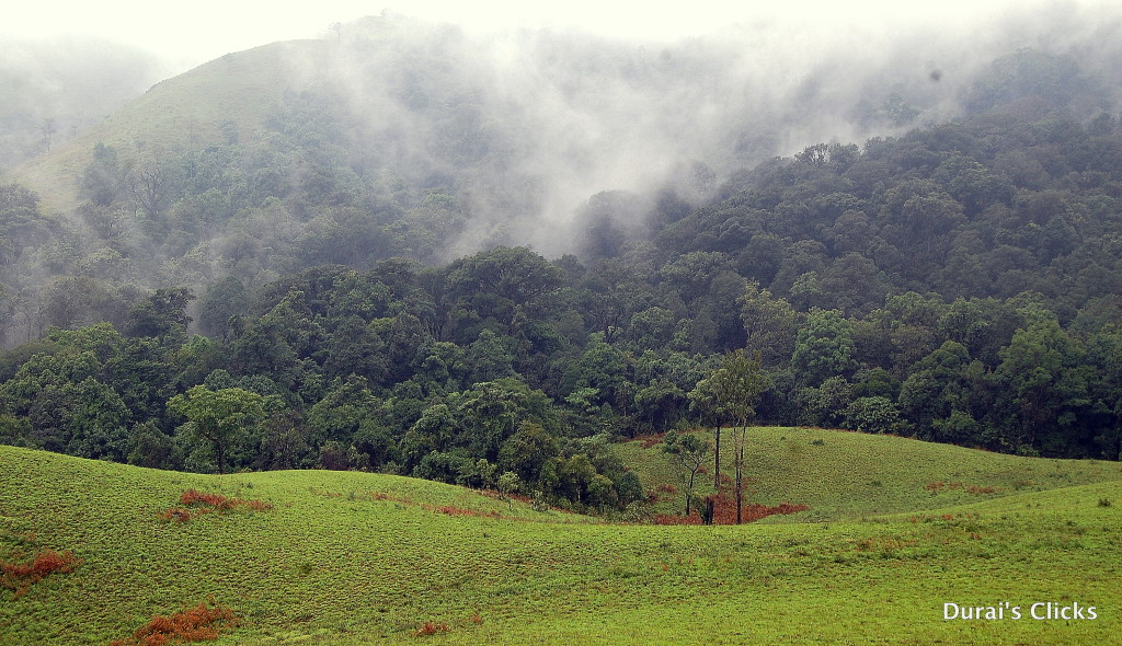 Kabinale forest - Sholas