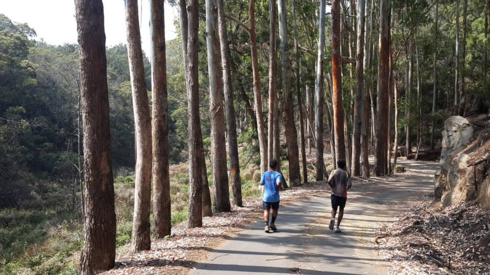 Tree side running - kodaikanal running