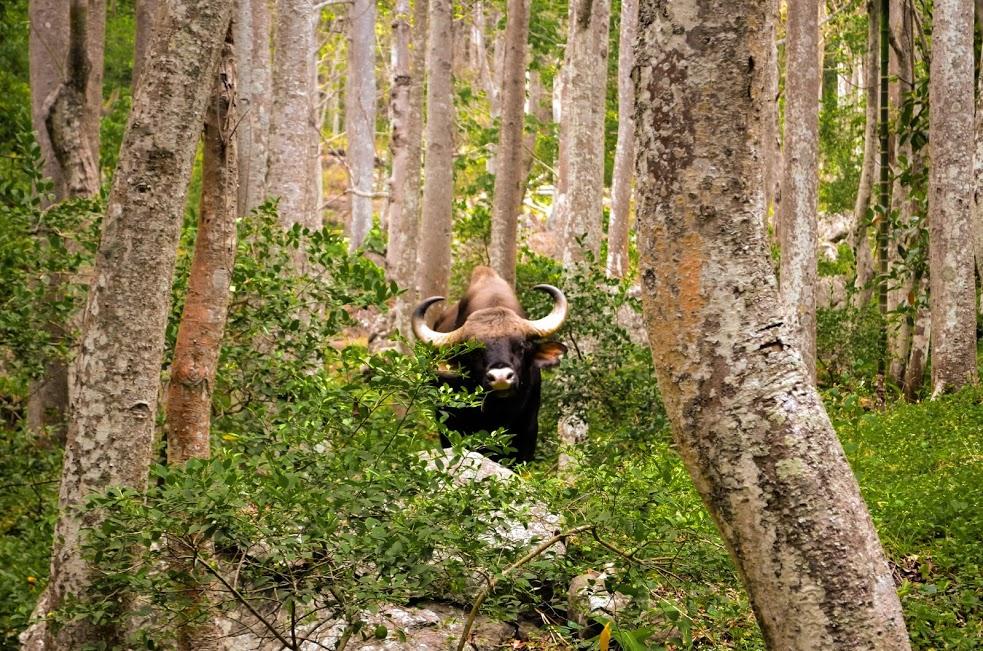 bison - bodi to konalar dam trek