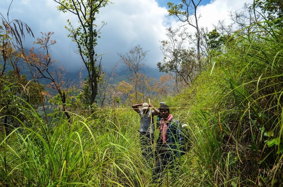 grasslands on the way to konalar dam