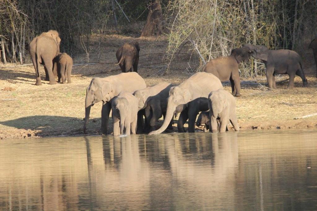 Elephants at Samieri - Aiyur forest